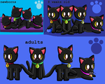 The Four Black Cats as newborns,8 weeks old,adults by pokemonlpsfan