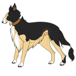 Solori by DimensionKennels