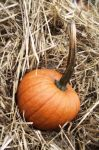 Harvest Pumpkin by PintabianDreamer1222