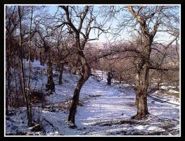 Trees and snow by bellaricca