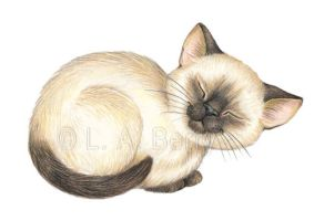 Contentment - Siamese Kitten by bigcatdesigns