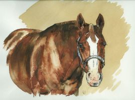 Quarter Horse by pocavistaranch