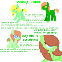 Videira Pony Species Ref by Mintys-old-account