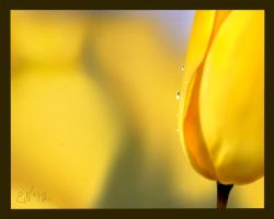Mom's yellow flower 4-12 by Ellee22