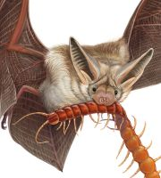 Pallid bat - detail by Elruu