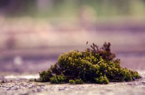 Nature in the city by Mac-Lizzie