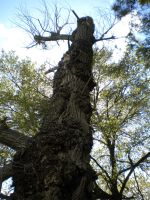 the ent by montmartre96
