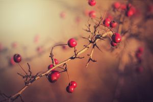 Red berries with light by CliffWFotografie