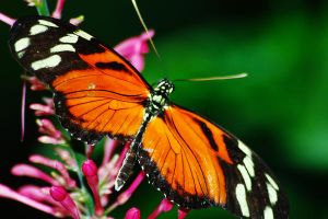 Orange and Yellow with Wings Spread by S-H-Photography