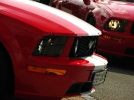 new mustangs. by AmericanMuscle