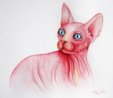 Pink cat by milky78