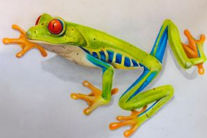 Color Pencil Red Eyed Tree Frog by pseppy1