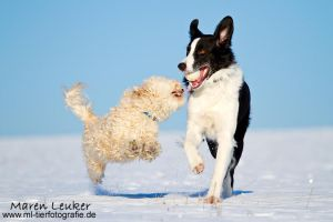 let's play by Maaira