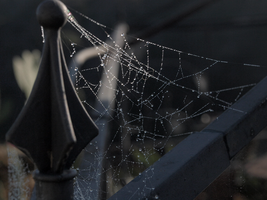 Wicked Web by photographyflower
