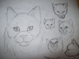 Cat Head Study Practice by xxMoonwish