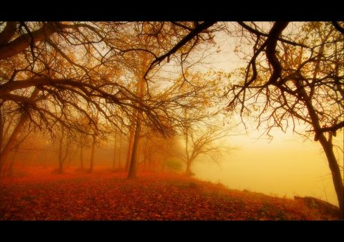 Foggy Autumn by lowapproach