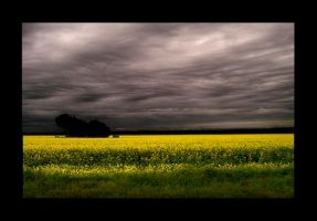 yellow fields by jess1586