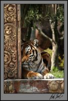 Crouching Tiger by SteelCowboy