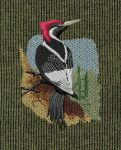 Ivory Billed Woodpecker by Echota