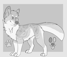 gray aussie adopt by Chargay