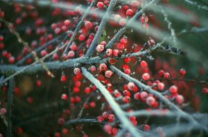 frost. by BlackDennie