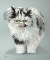 Persian cat by Julemus