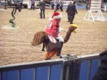 Olympia 2010 - Shetland Pony Grand National - 1 by Isabella-Alice