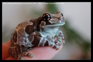Milk Frog by theperfectlestat