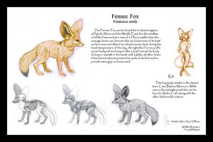 Fennec Fox Study by KatGirlStudio