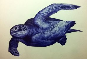 Tropical Turtle by EmylioThorn