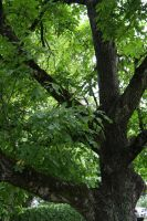 Trees make me happy :D by ThisDay