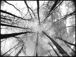 Trees and the sky by amtillustrator