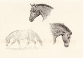 Pencil sketches by SheWolff