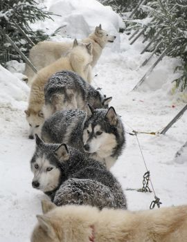 the pack by aniabeata