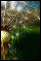 Those Summer Seeds by FramedByNature