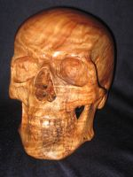 Carved wood skull in Camphor by WaterwalkerWoodworks