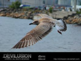 IMG_6185 by D3vilusion