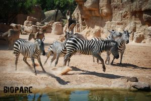 bioparc 6 by darkart84-stock