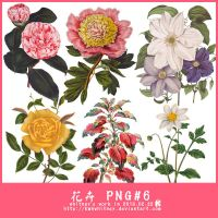 FLOWERS PNG by Kmhwhitney