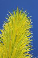 Yellow Pineglass by eillahwolf