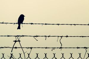 Barbed Wire by mydigitalmind