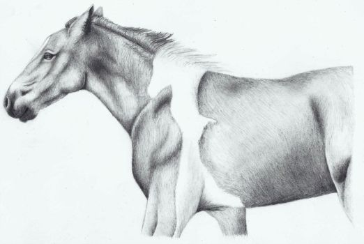Horse - Pencil Drawing by icepaw99