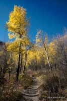 A Walk through the Aspens by abstractcamera
