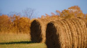 Hay Hay Hay by PhotographsByBri