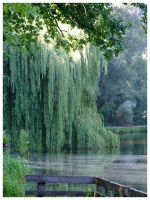 Weeping willow by inbalance