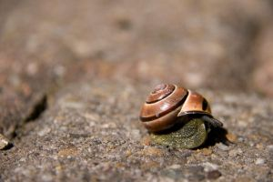 Ohhai mister snail by Bloodstained-Snow
