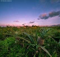 Pineapple Express by Gaisano