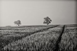 Two Trees by dappem