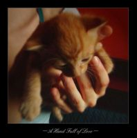 A Hand Full Of Love by cat-lovers