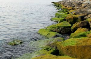Moss on rocks by Asher-Kinng